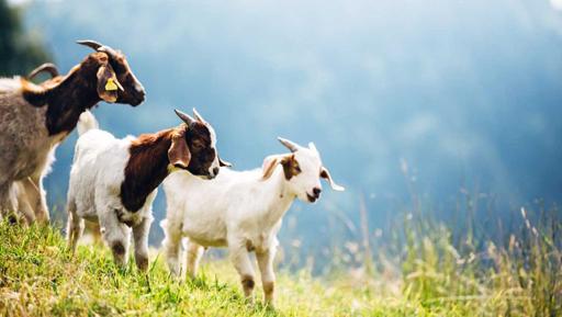 Animal feed, Gardening supplies, Fencing Lower Hutt